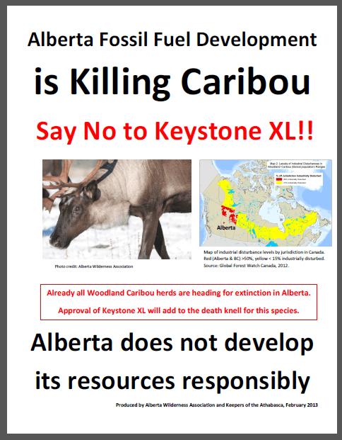killing-caribou