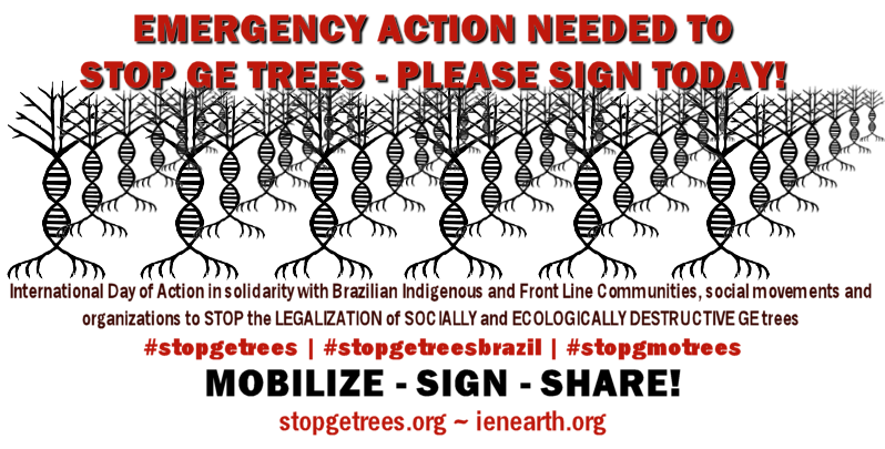 TUESDAY 3 March: Emergency Day of Action to STOP GE Trees